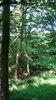 Hanging_tree