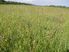 Diverse_meadow