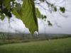 Tree_drip