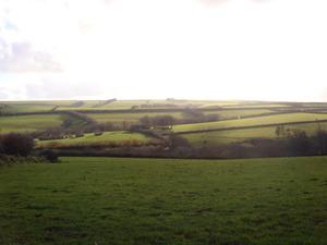 A grass farm