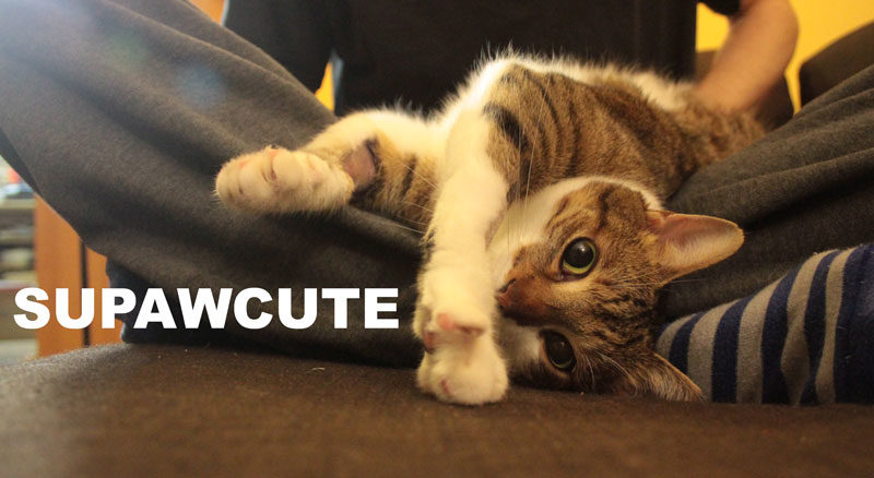 Supawcute Pet Showcase! (Rules & How to Submit a photo for the site!)