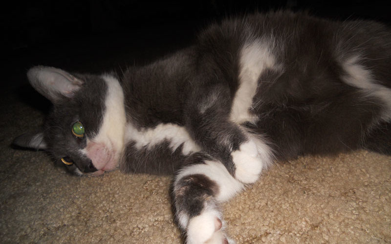 Daisy Mae's Kitty Miracle: Her Heart Murmur And How She Got Rid Of It – PART 3