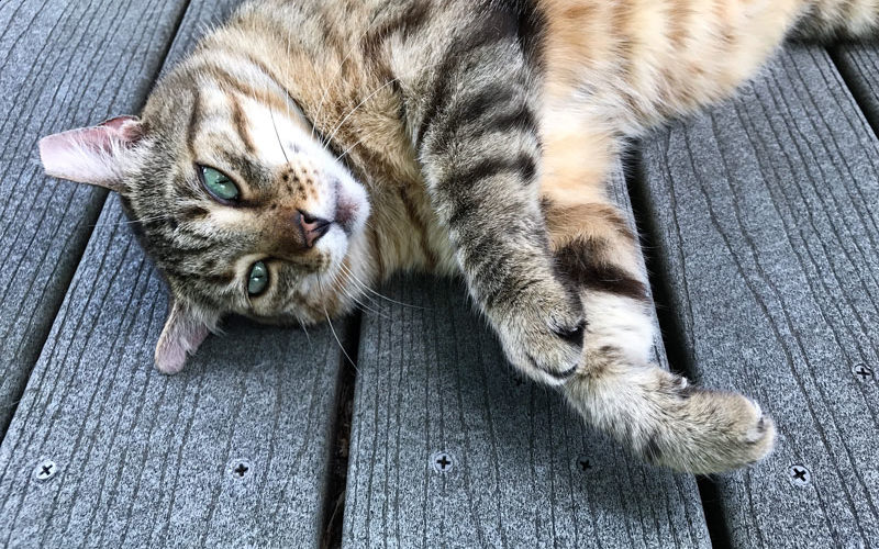 Meet the Eastside Cats!