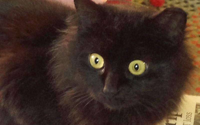 Pet Showcase #2 – Our Follower's Pets!