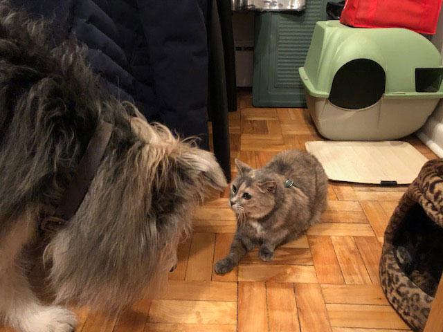 Meet Cheba and Dylan!