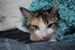 Meet Pets Overload's New Kitty Kalista!