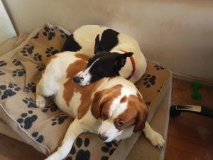 PET SHOWCASE #4 – OUR FOLLOWER'S PETS!