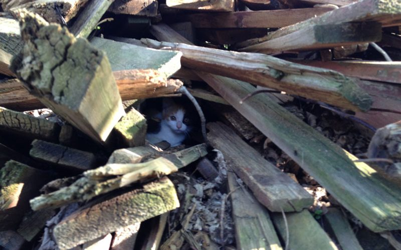 What Rescuing a Kitty for a Shelter is Like