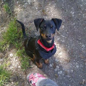 PET SHOWCASE #5 – Our Follower's Pets!