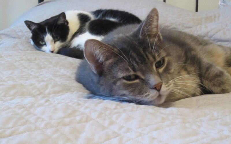 An Interview with Katherine one of the Directors of Forgotten Ones Cat Rescue