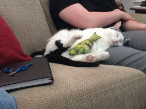 Why adopting a rescue cat was the best way to go for me and maybe for you as well