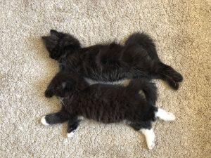 PET SHOWCASE #6 – OUR FOLLOWER'S PETS!
