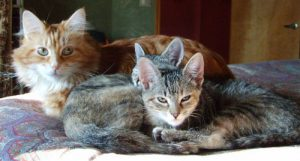 How I Became a Kitten Foster Mom
