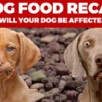 dog-food-image_thumb
