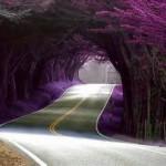 road pretty