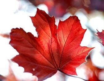 O Canada Autumn 2013