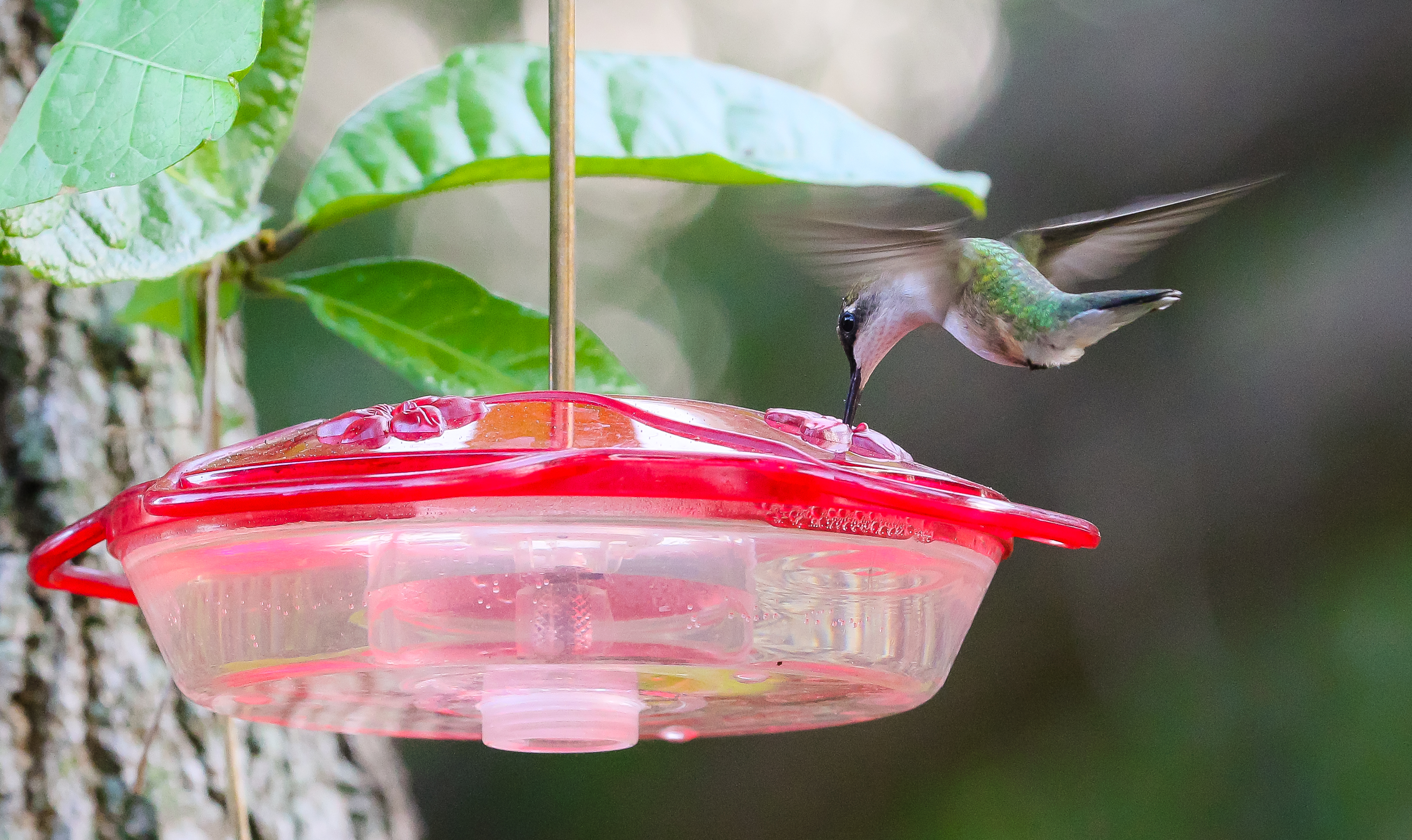 wild itm bird hanging proof garden backyard metal outdoor squirrel patio feeder seed