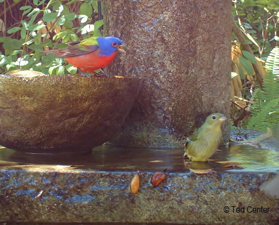 Tips For Feeding Birds In South Florida