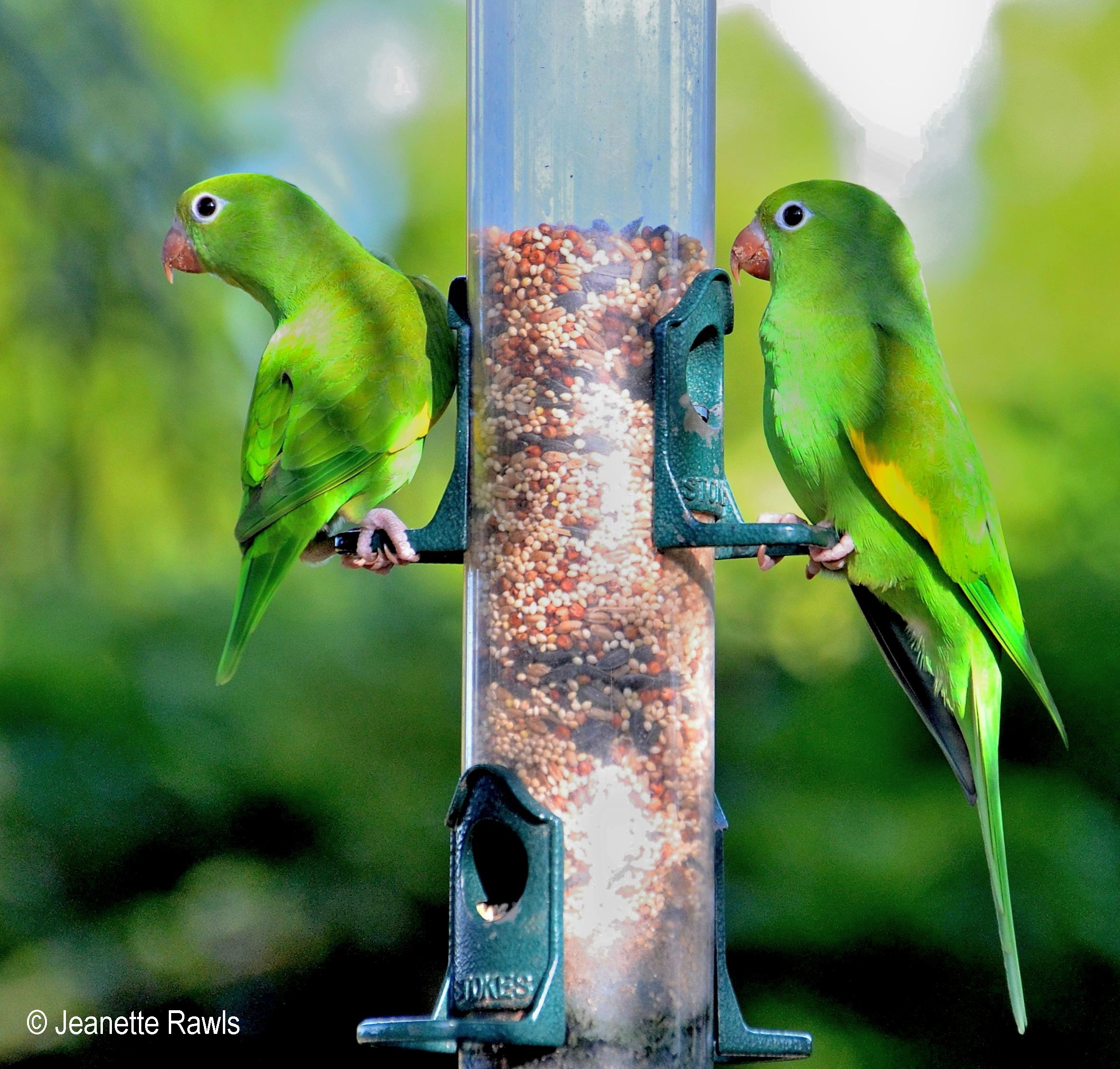 bird the a feeder in ships projects by yellow onehundred folds dave calvin aluminum yourself fold original flat minutes it brdi laituri fun