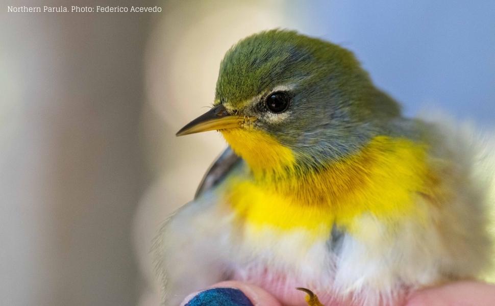 Original carouselexoticbirdswebinar (1)