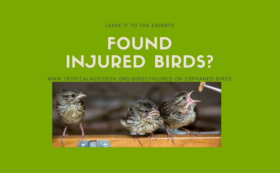 Original carousel injured birds