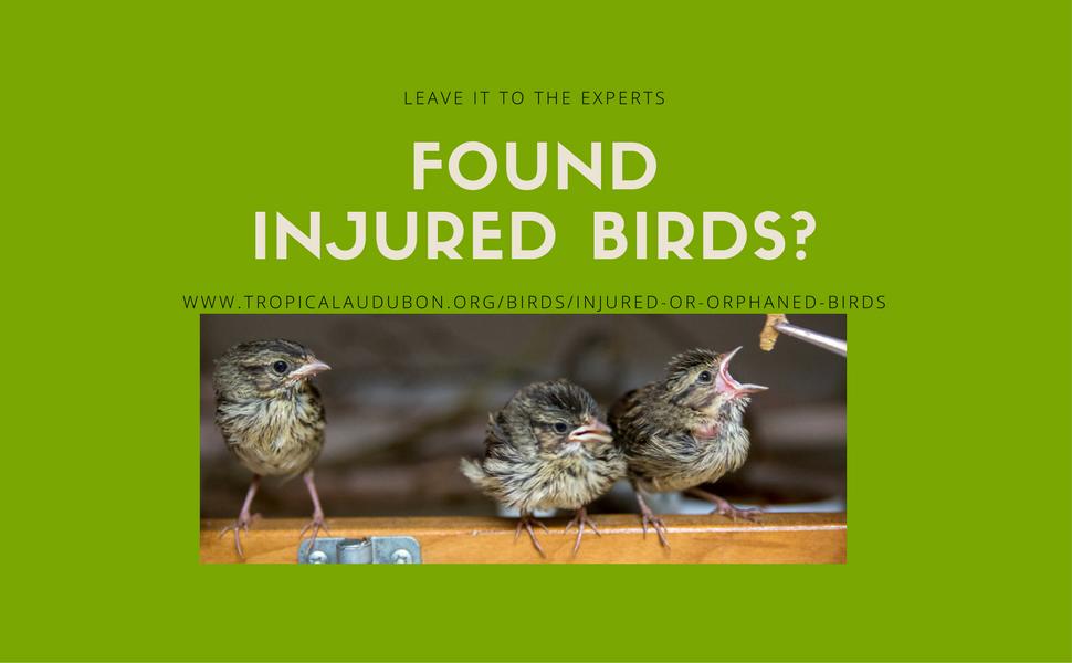 Original carousel injured birds