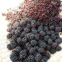 ELDERBERRY AND BLACKBERRY JAM Recipe