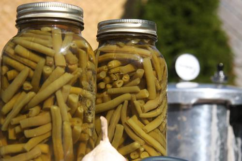 Garlic Canned Green Beans