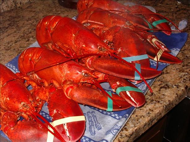 Maine Boiled Lobsters
