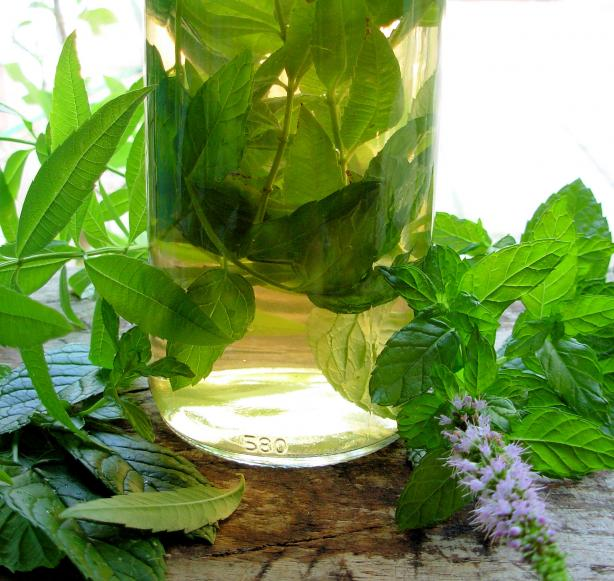 Herbal Vinegar With Lemon Verbena & Mint