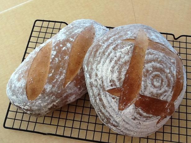 Sourdough Rosemary Potato Bread