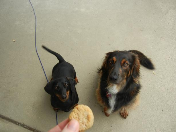 Ankle Biter Peanut Butter Drops (For Your Fur Baby)
