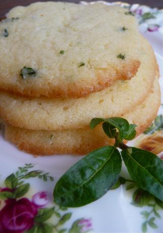 Ellen's Lemon Verbena - Herbal Gardens - Longmeadow