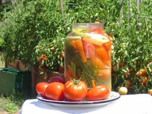 Russian Pickled Tomatoes