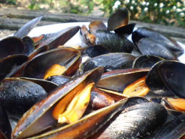 Steamin' Mussels