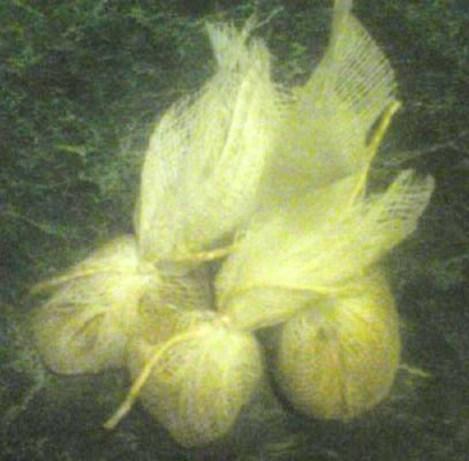 Bouquet Garni Seasoning