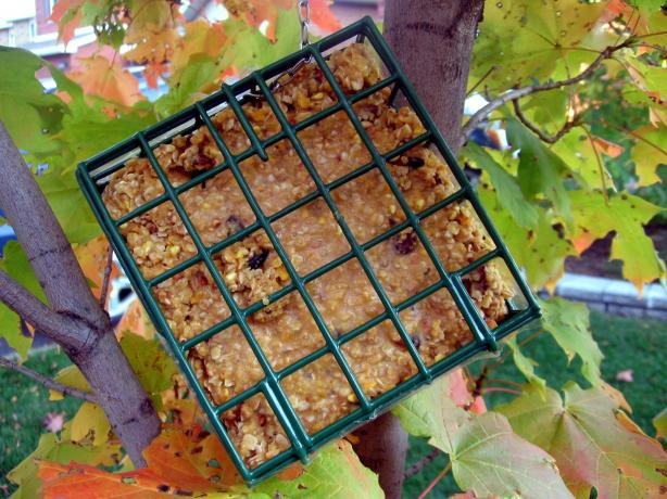No-Melt Suet (For Birds)
