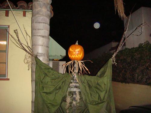 Holiday Pumpkin Treats