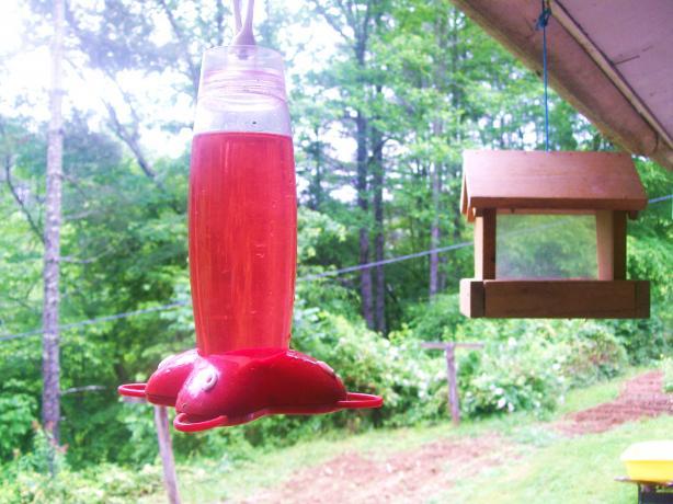 Hummingbird Syrup for Feeders