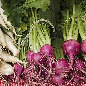 Daikon and Celery Salad