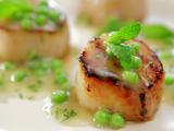 Caramelized Scallops with Fresh Green Pea Vinaigrette