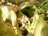 Bibb Lettuce with Shaken Vinaigrette