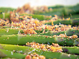 Asparagus and Parmesan-Egg Crumb Topping