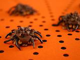 Pecan-Caramel Spiders