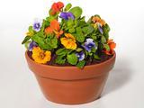 Flowerpot Cake