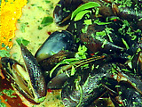 Chef Emeril's Asian-Inspired Mussels