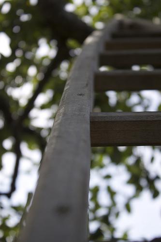 Apple Ladders