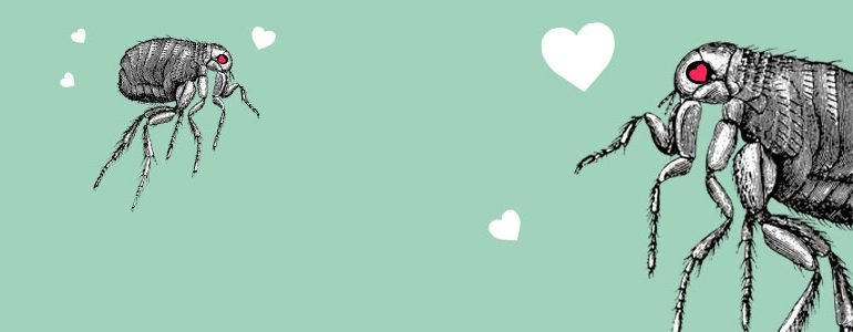 fb_valent_sweetheart_header (1)