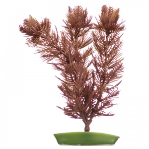 Marina Foxtail - Aquarium Plants Best Price