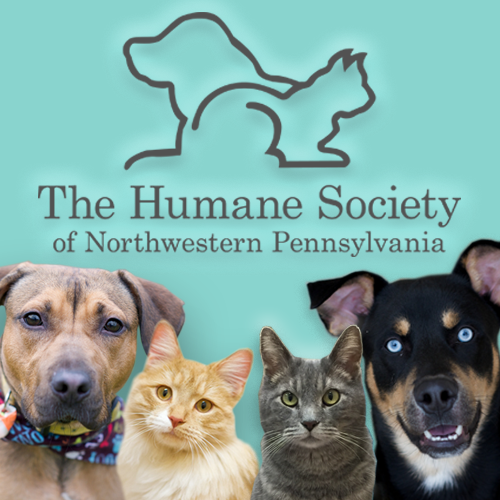 Dog Rescue Northwest Pa
